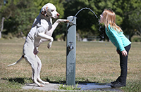 Dog helps girl at water fountain