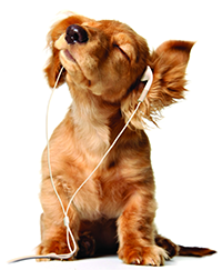 Doggy Dogs dog with headphones